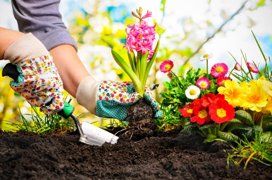 Shutterstock image of someone gardening