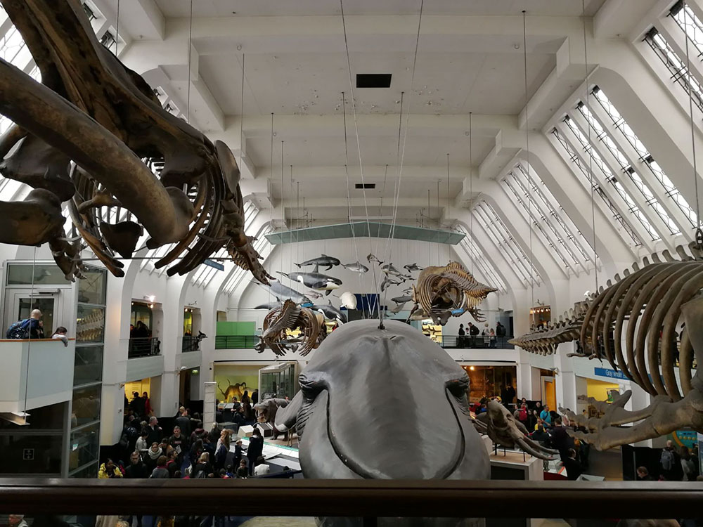 A picture from the Natural History Museum from the hall of marine mammals