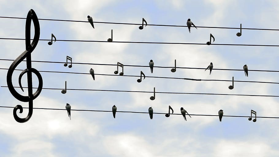 birds and musical notes together on phone lines