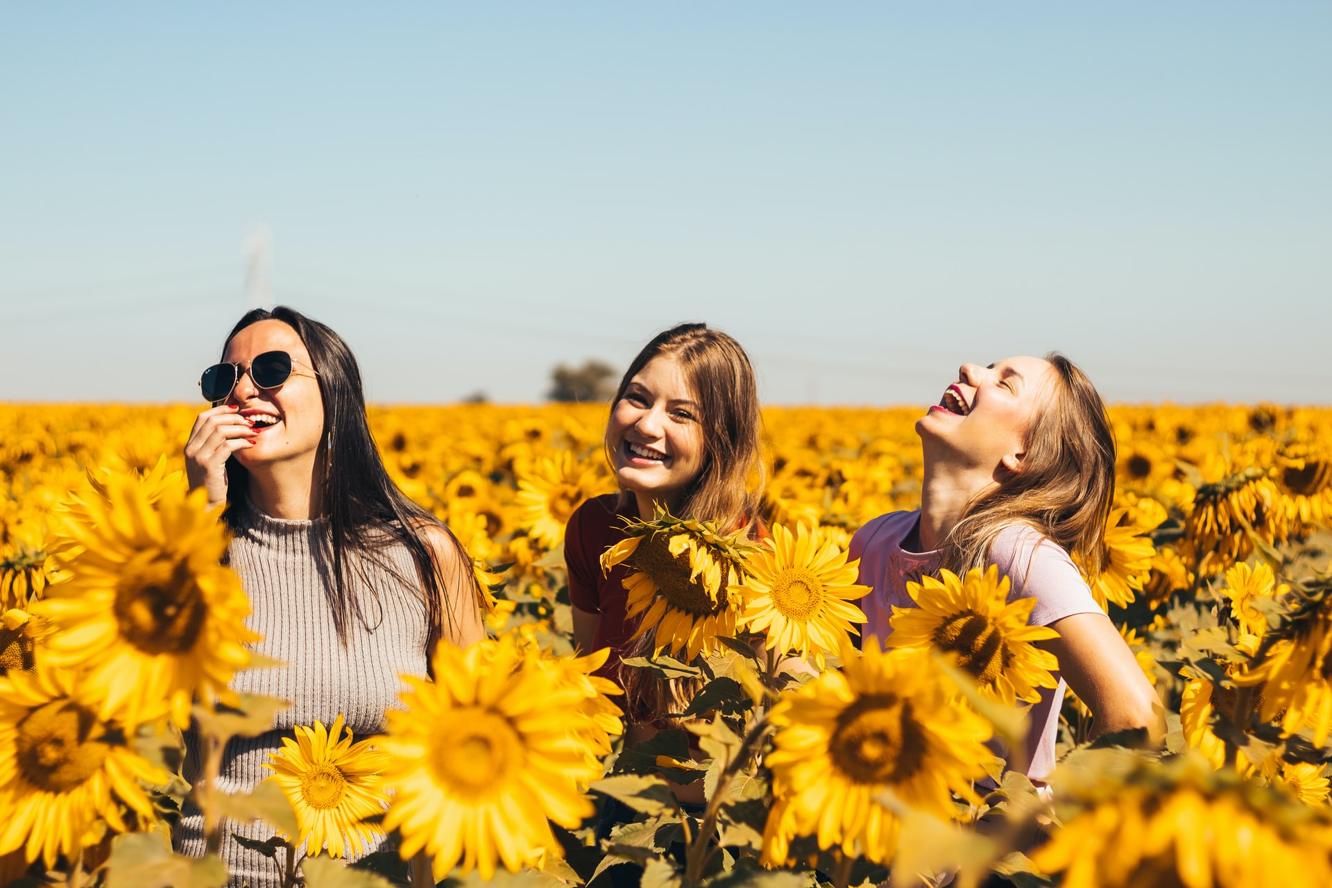 Three young ladies laughing in a field of sun flowers