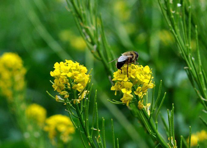 SGO: Let's Bee Friends