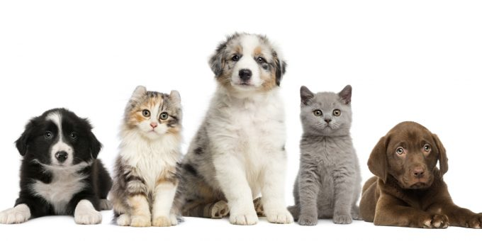 #Livingwell Creatures for companionship – How pets can help your good health and wellbeing