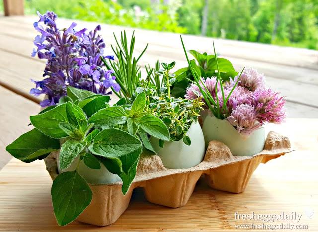 #LivingWell – Eggshell Herb Garden