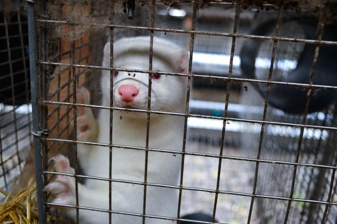 Declaring war on animals