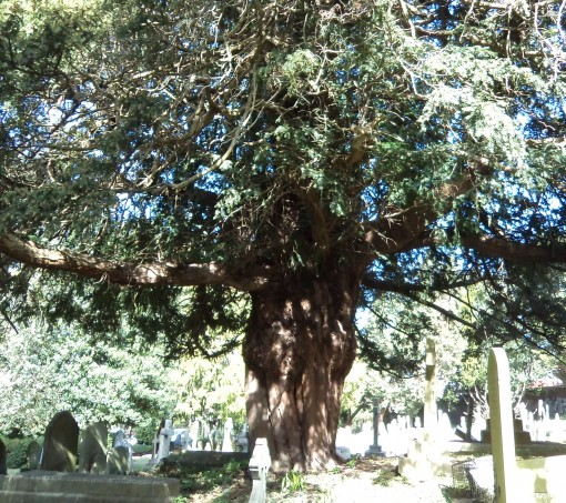 Yews, Jews, Aliens and Canterbury World Heritage Site - a busy week