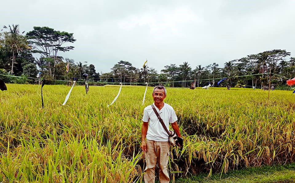 Heritage rice in Bali: Comparing the effects of two rice varieties on paddy soil quality